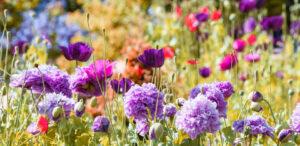 4 claves para darle un toque veraniego a su jardín